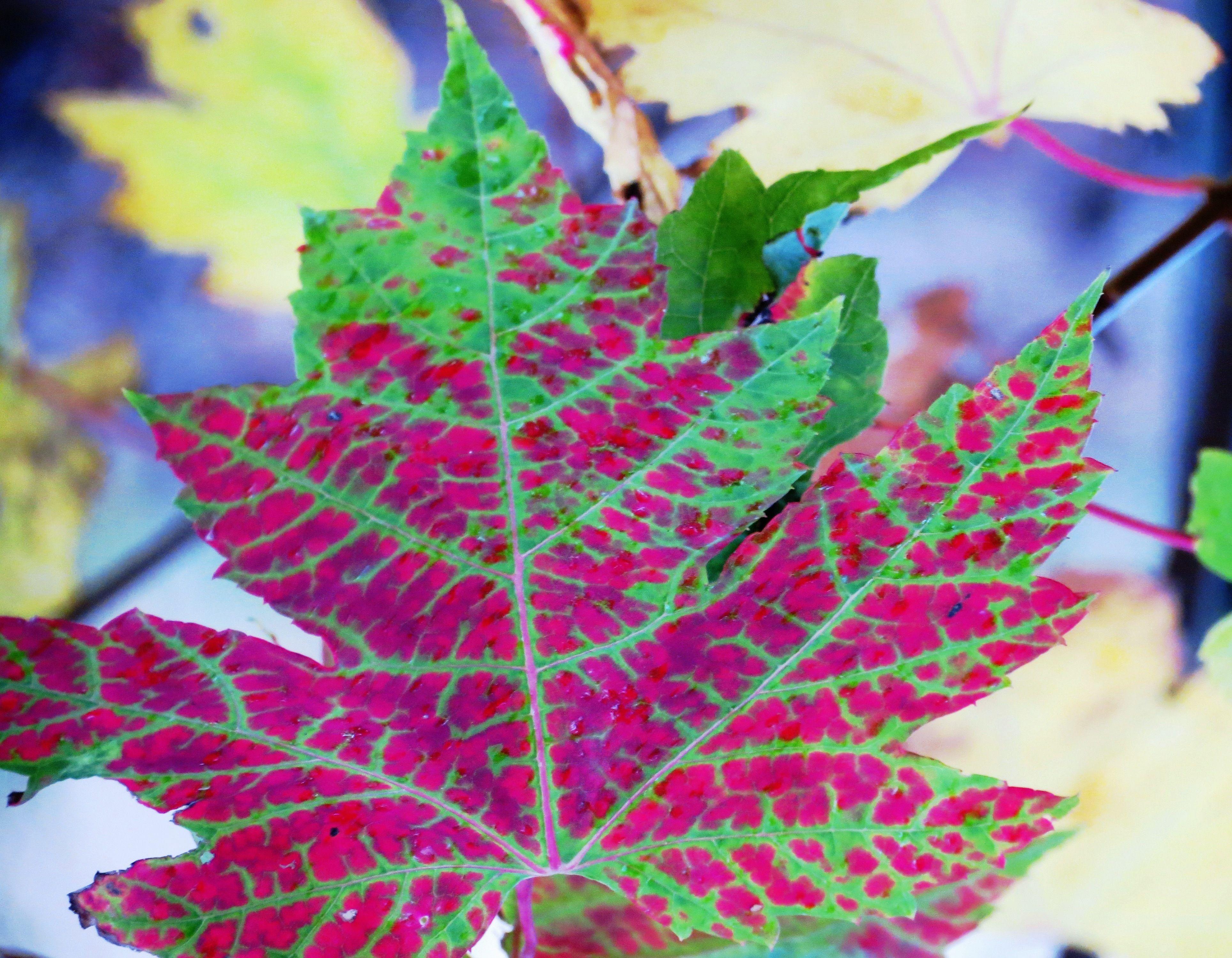 #Autumncolors, #GTA, #ParcDownsviewPark, #DownsviewPark, #Toronto, #Ontario, #Canada, #CanadaLands
