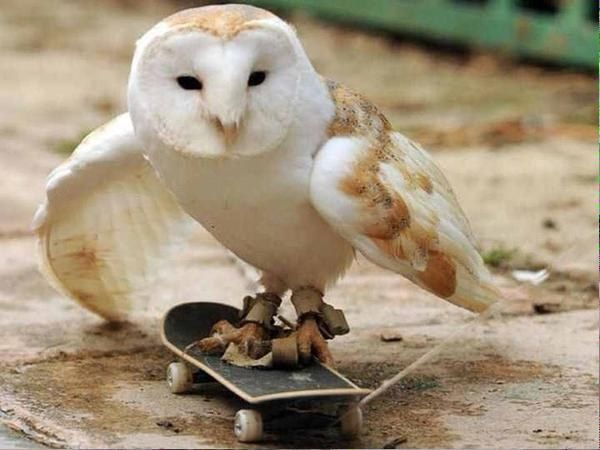 24 Extremely Smooth Ways To Slide Into Someone S Dms Funny Animal Pictures Funny Animals Funny Owls