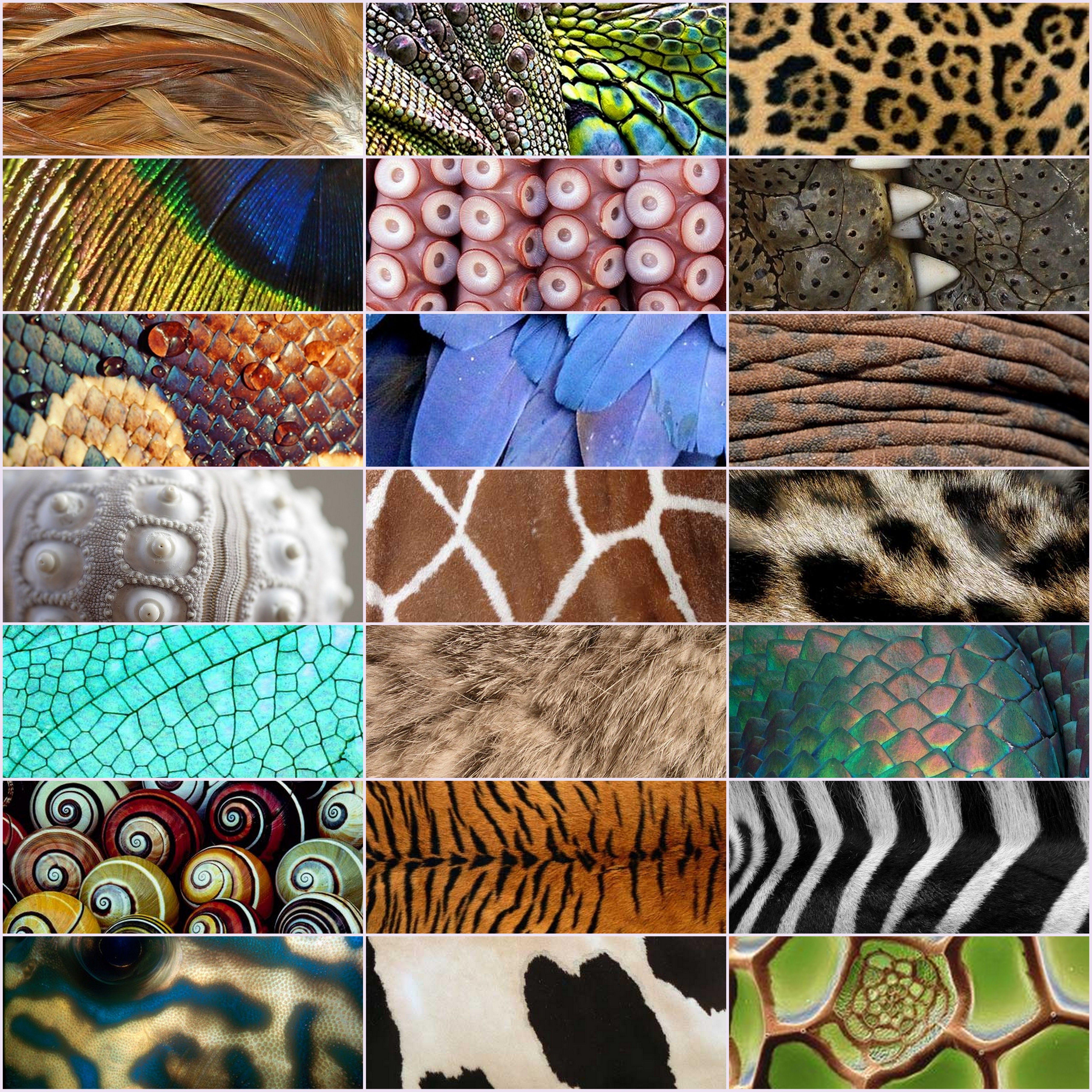 Dieren textuur