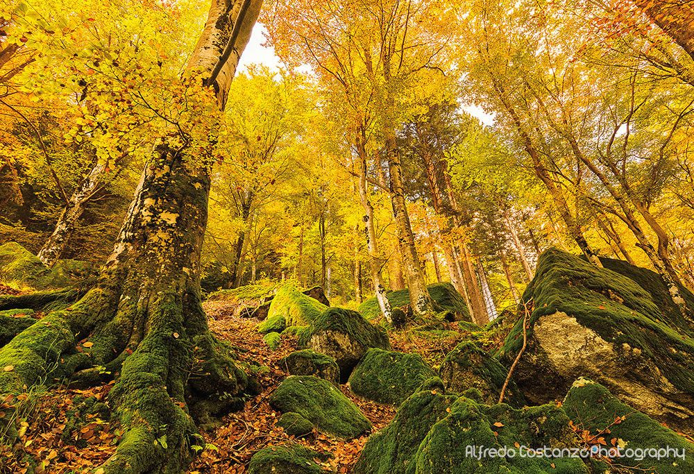 ***Autumn in the forest (Lombardy, Italy) by Alfredo Costanzo on 500px