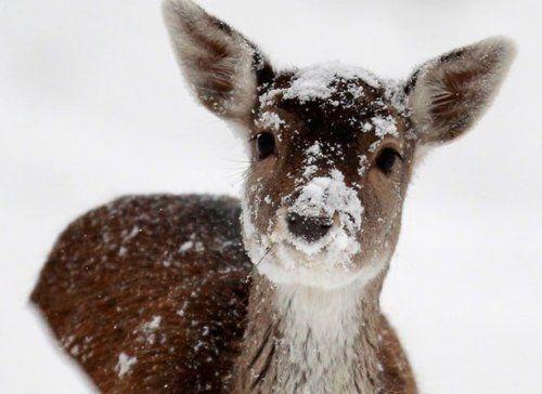 frosty nose