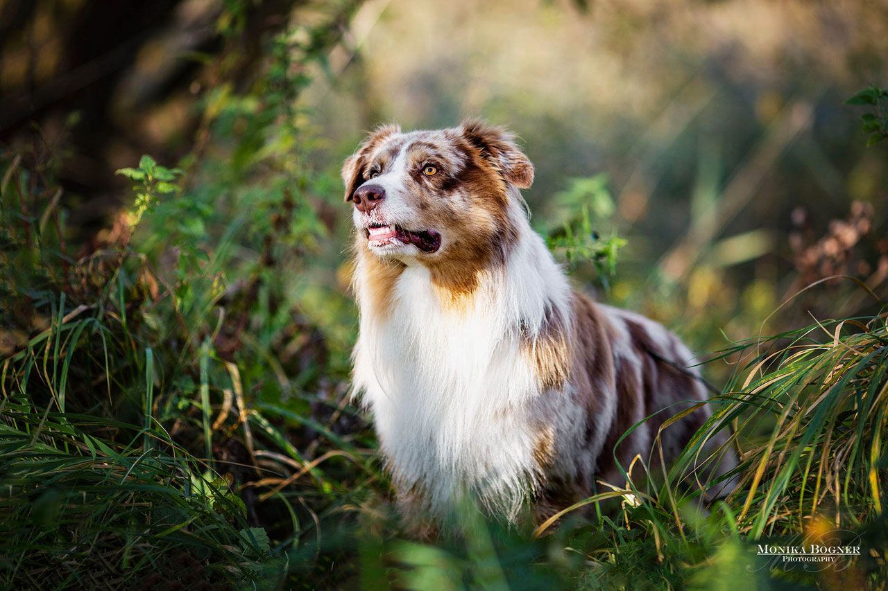 Hunde In Der Natur Hundefotografie Monika Bogner Photography Hundefotografie Hunde Hundefotos