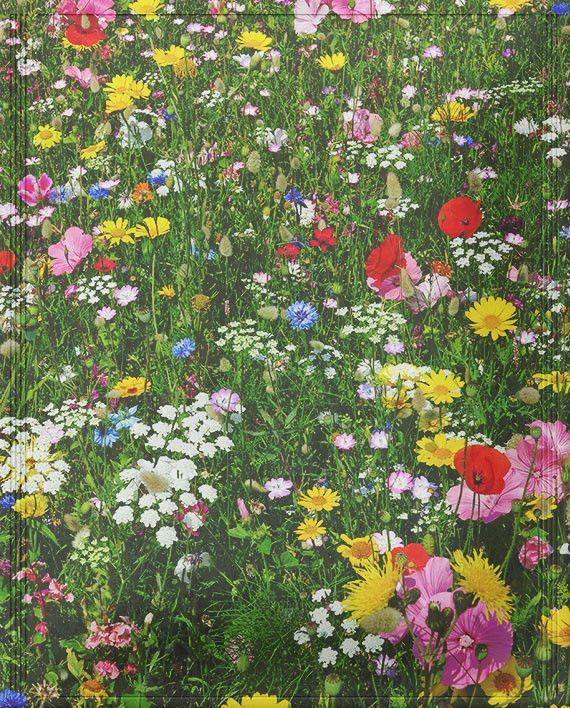 Australia Wild flowers, Meadow flowers, Flowers australia