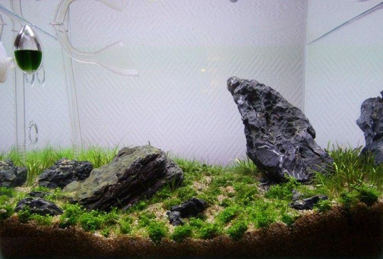 Nano Aquarium Einrichten Wasser Befullen 4 Aquarium Pinterest