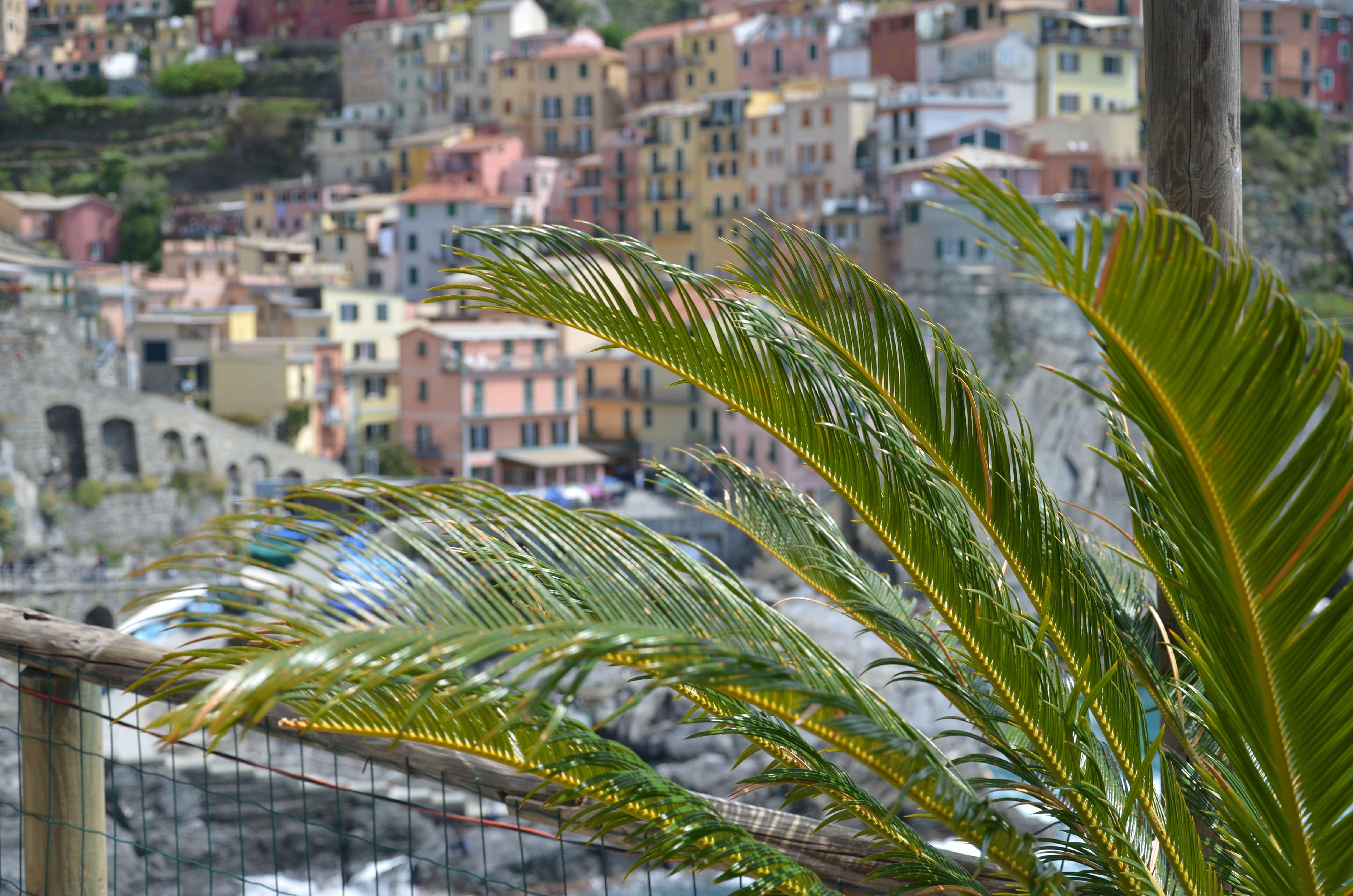 Cinque Terre Colorful HousesCinque ItalyHouse BeautifulPalm