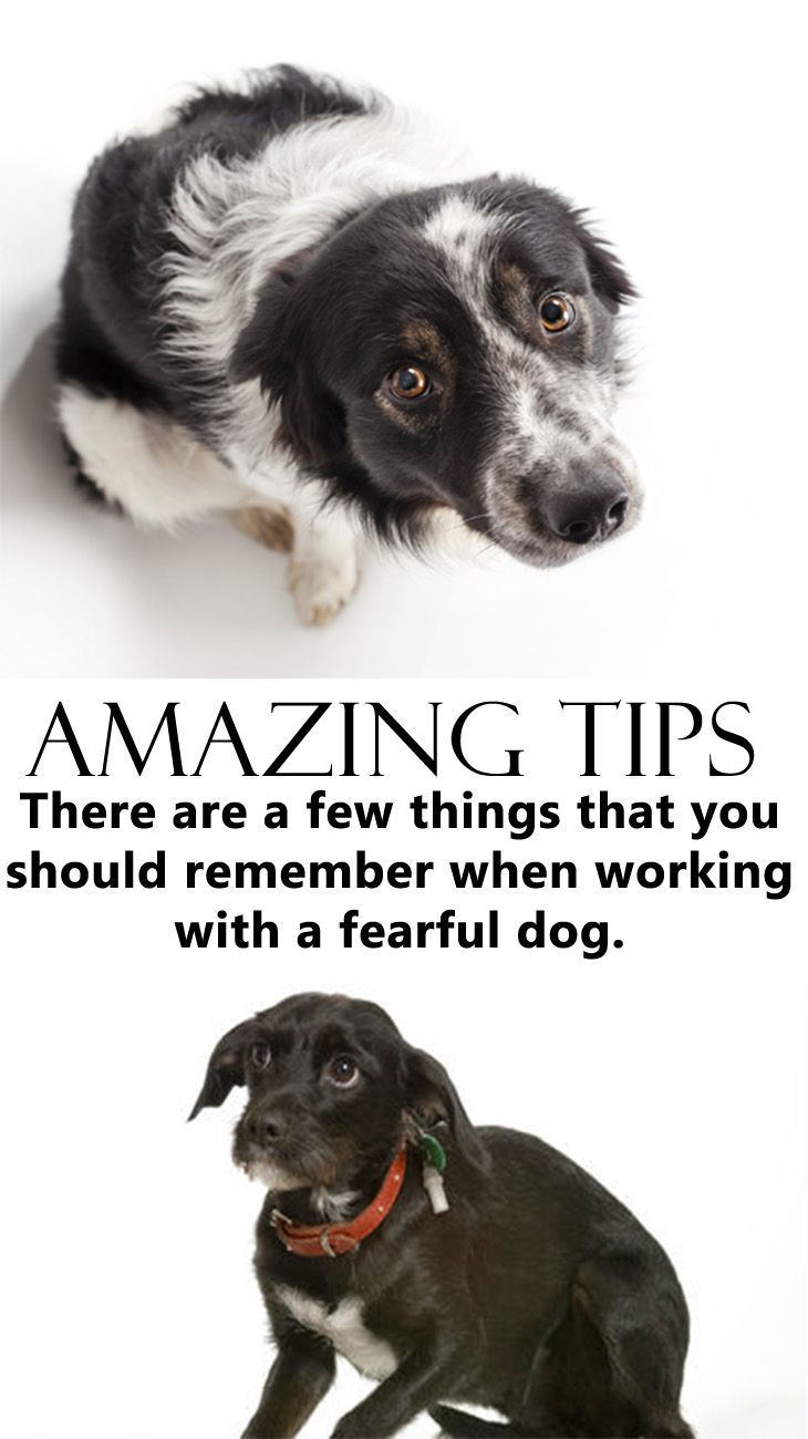 Amazing tips how to solve your fearful dogs dog training cute