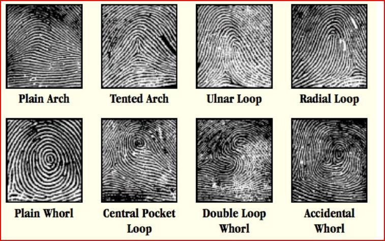 60 Basic Fingerprint Patterns Fingerprints Are You Ready Look At Enchanting Fingerprint Patterns