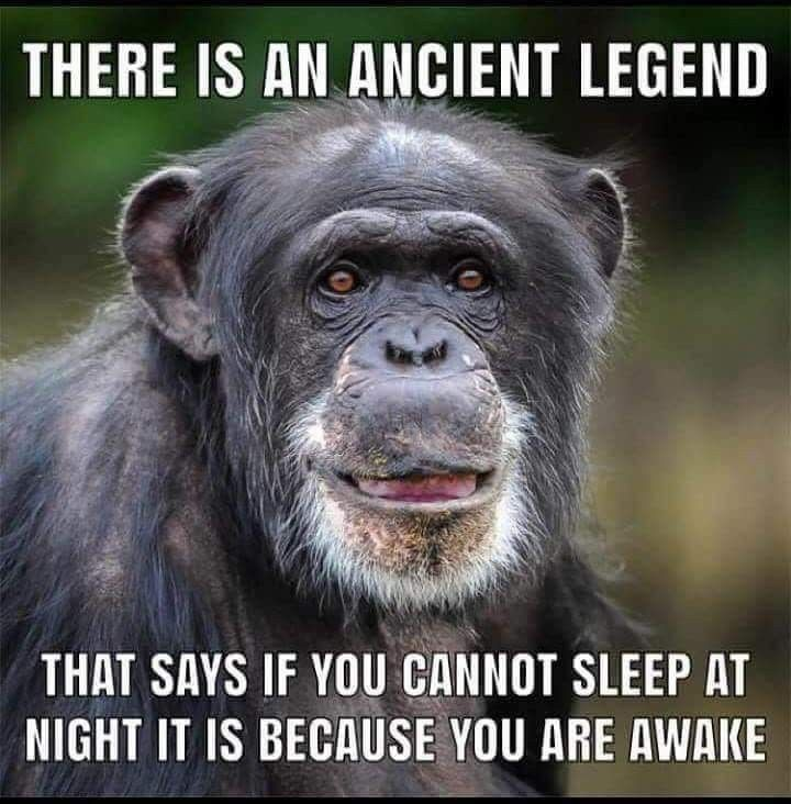 Funny Pictures Morning Quotes Funny Monkeys Funny Funny Good Morning Quotes