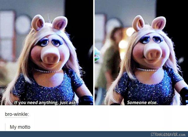 Funny Meme Tumblr Pictures : Funny tumblr post funny stuff i guess? pinterest humor