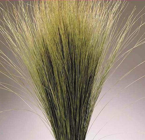 Dried Dune Grass - Natural.