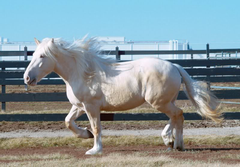 realistic horse breeds # 37