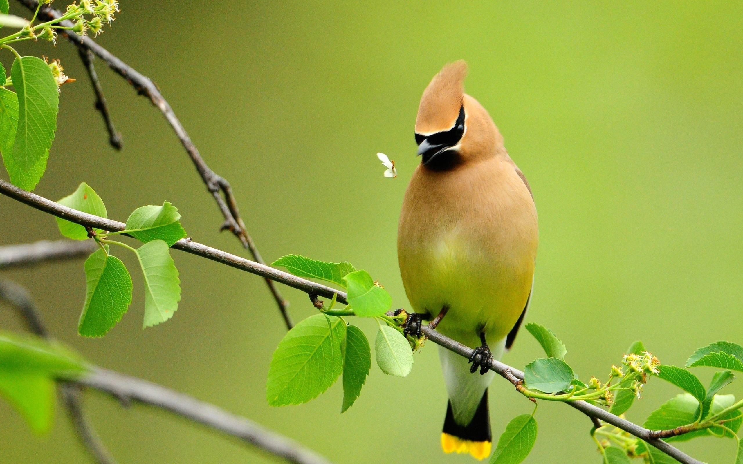 Beautiful Birds Wallpapers Beautiful Bird Wallpaper Beautiful Birds Cute Birds