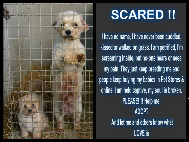 Please Adopt And Don T Shop Shut Down The Puppy Mills Educate