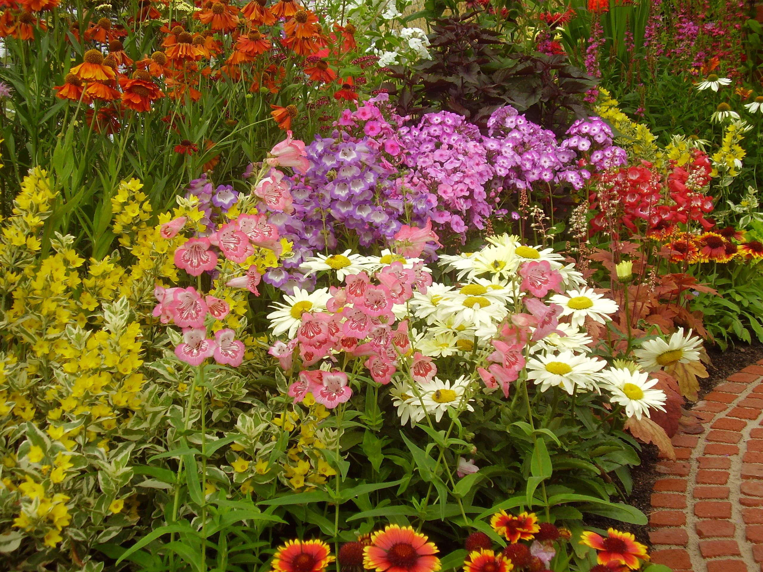 Perennials, Roses and Traditional Shrubs Garden On A