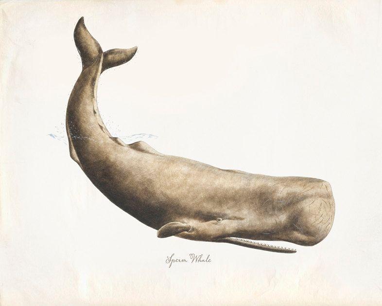 Vintage Whale Illustration Walvis Illustratie Aquarel Illustratie Walvis Tatoeages