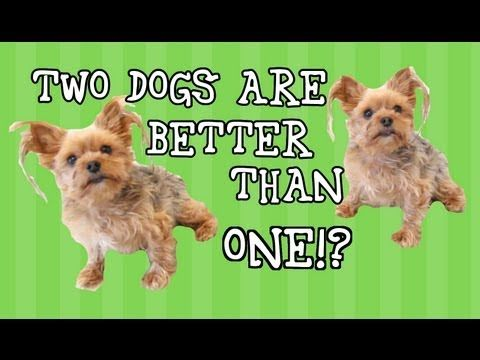 Double Dog Dare Funny Talking Dogs Funny Talking Dog Dogs