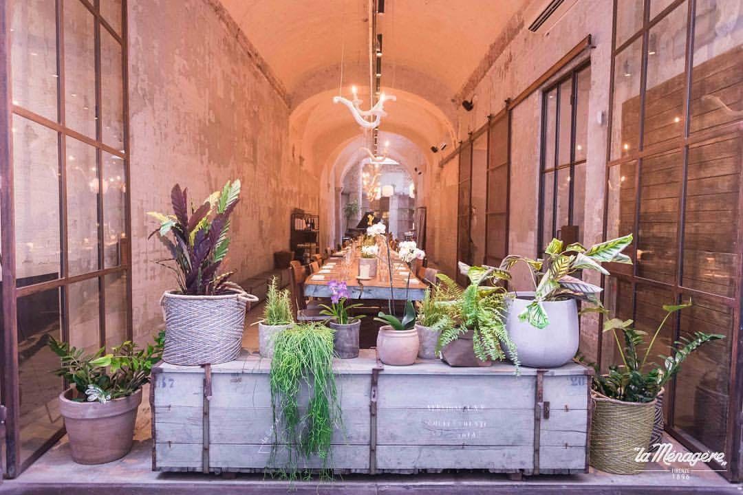 Florence La Menagere Via De Ginori 8r Florence Instagram Plants
