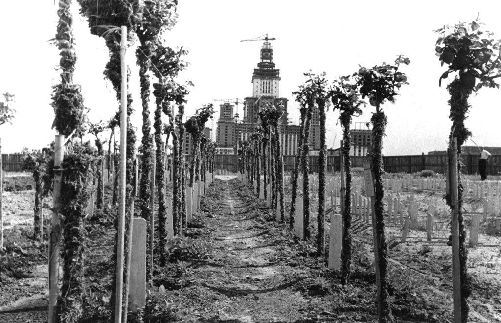Посадка аллей МГУ на Воробьевых горах,1951 г.
