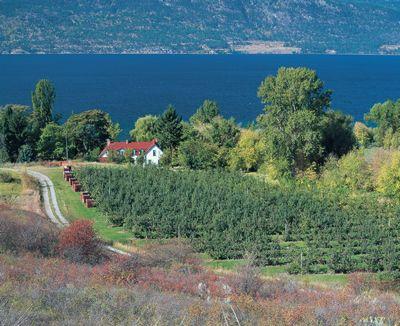 Fruit Orchards Near Kelowna In The Okanagan Valley Bc Okanagan Valley Favorites