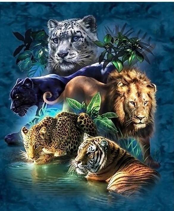 Animals Big Cats Art Wild Cats Animals Wild