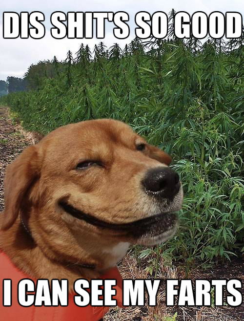 30 Funny animal captions - part 48 (30 pics)   Amazing ...   Animal Fart Memes