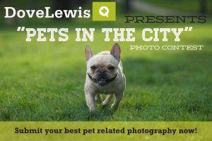 Dovelewis Photo Contest