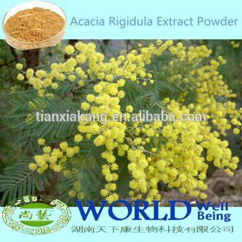 100 Natural Acacia Rigidula Powderacacia Rigidula Extract