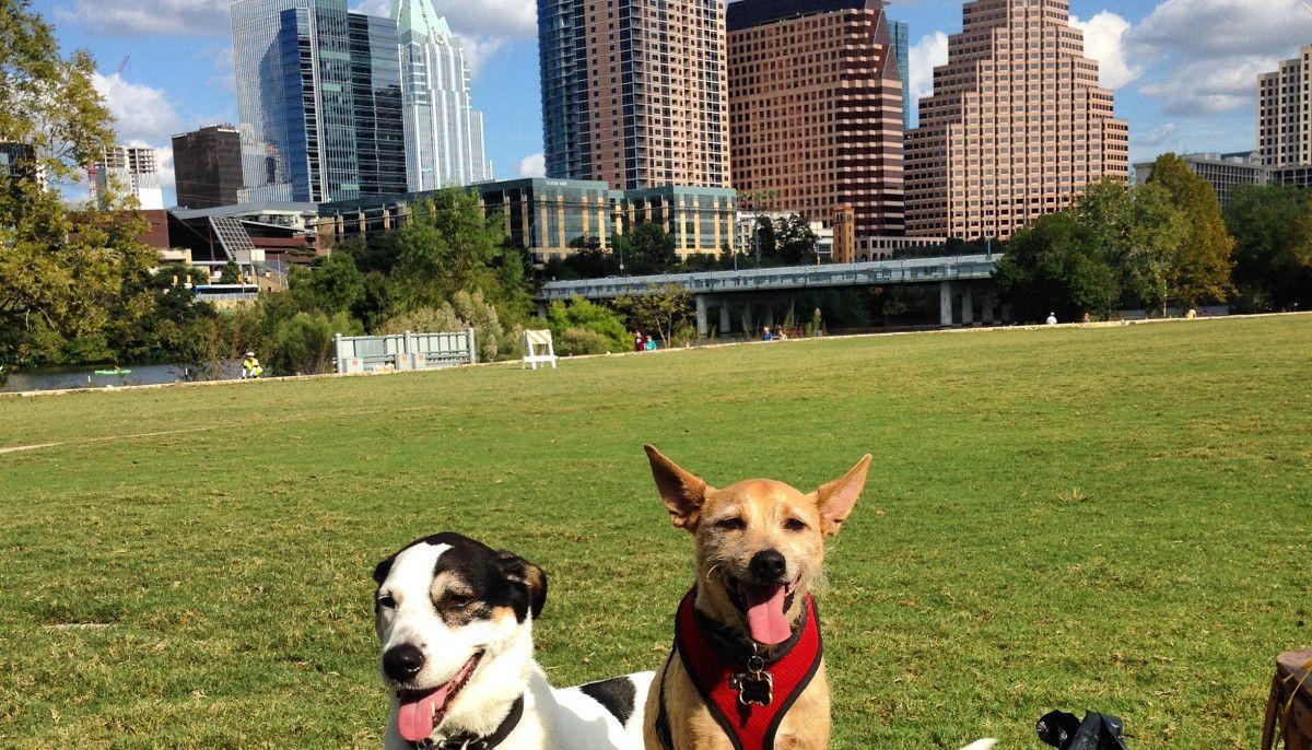 Austin collars top spot among americas most petfriendly