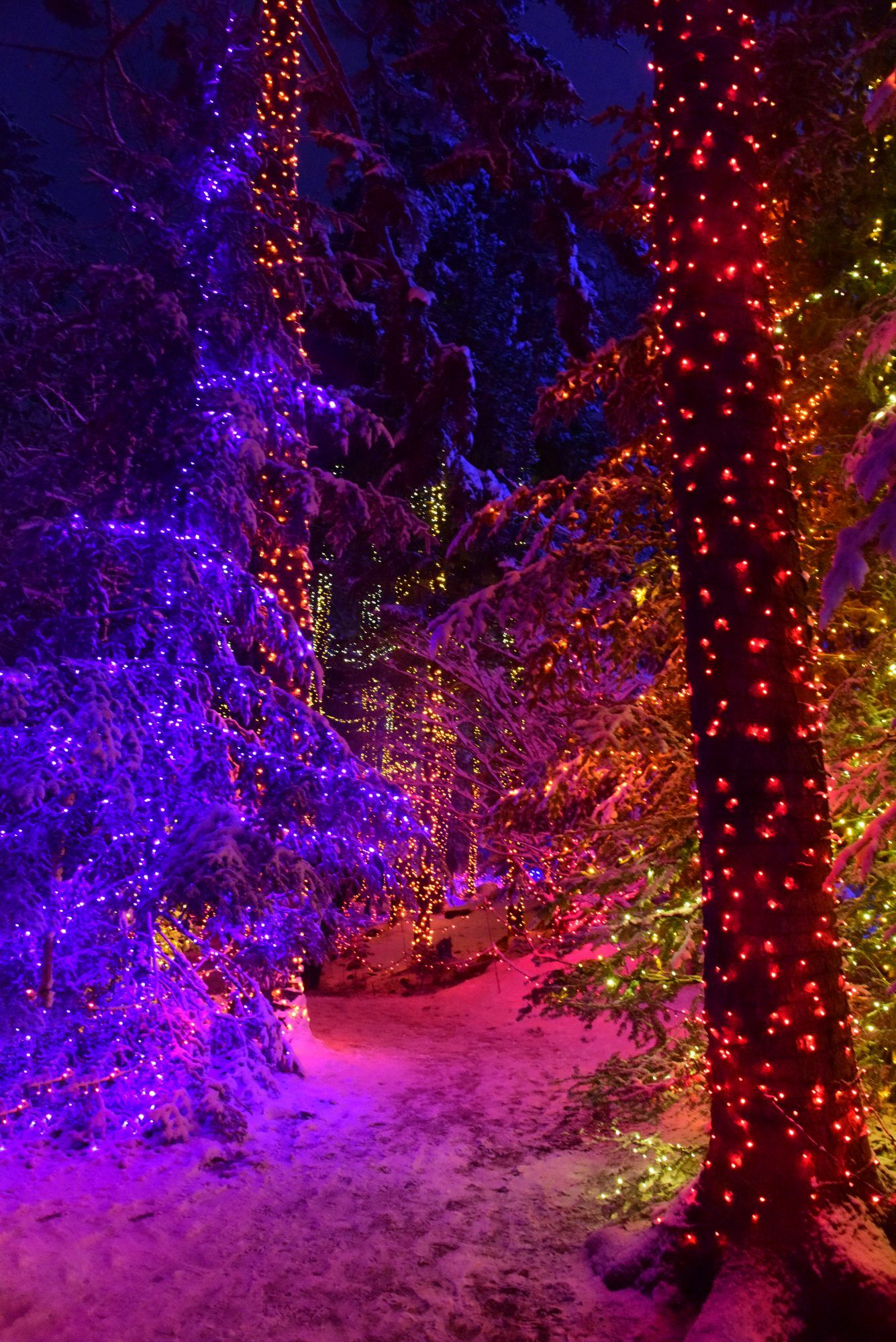 16 of the Most Magical Christmas Light Displays Around the