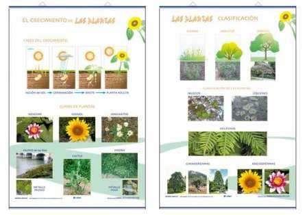 Lamina plantas el crecimiento clasificacion edigol for Plantas ornamentales con sus nombres lamina