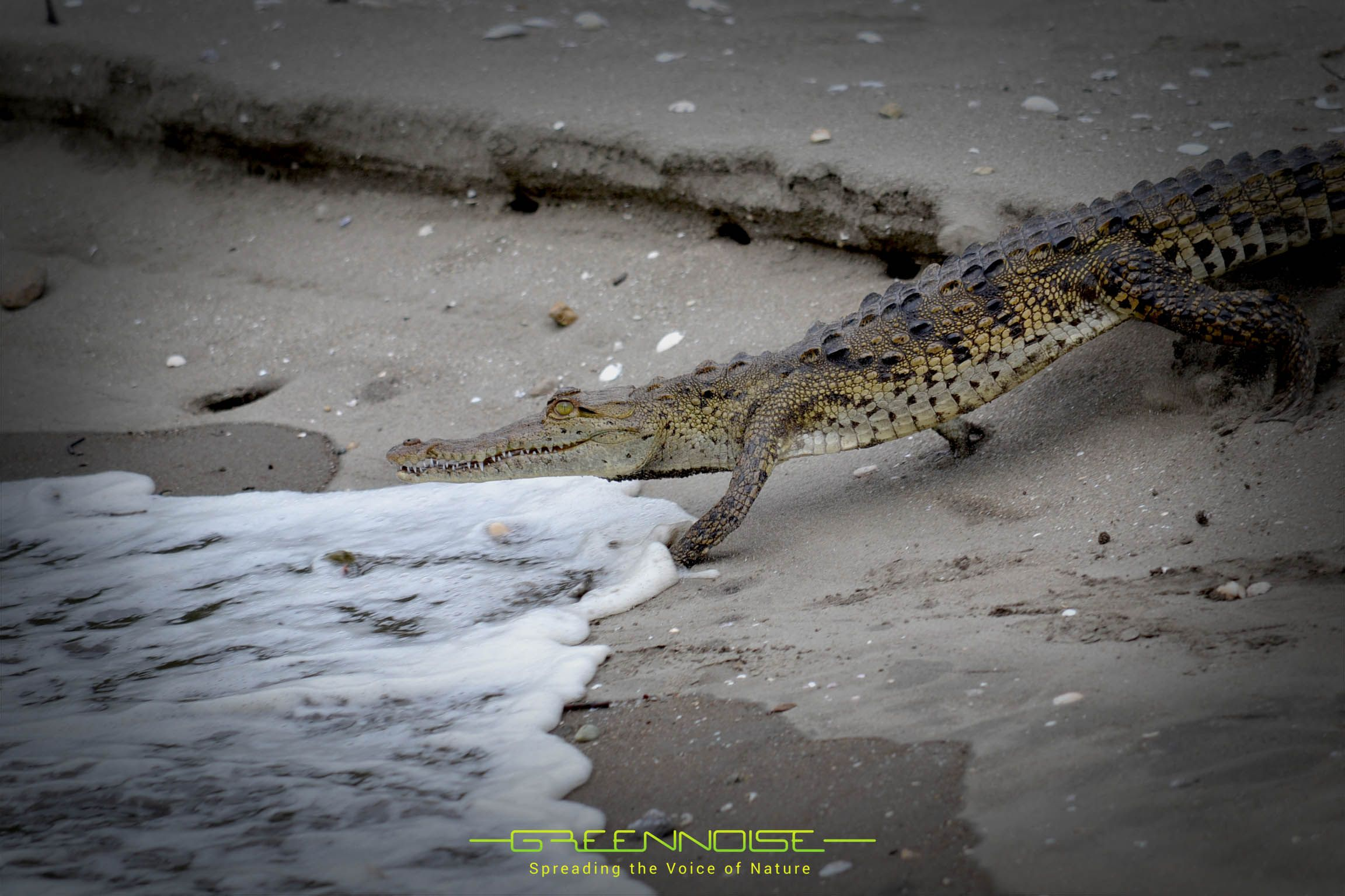 Un amigo que nos vino a visitar! Guanacaste