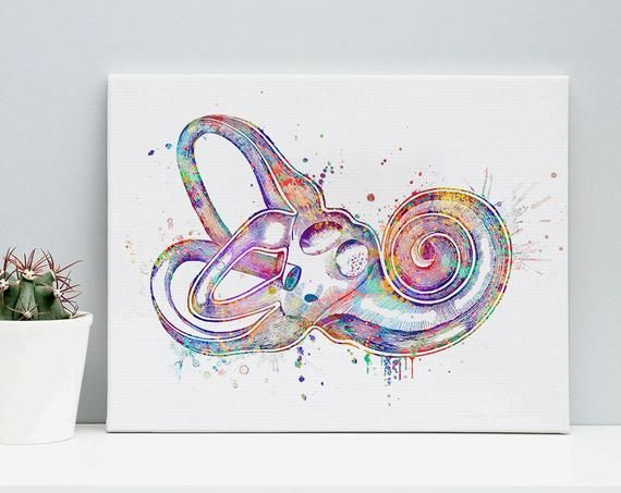 Inner Ear Labyrinth Watercolor Art Print Audiologist Gift ...