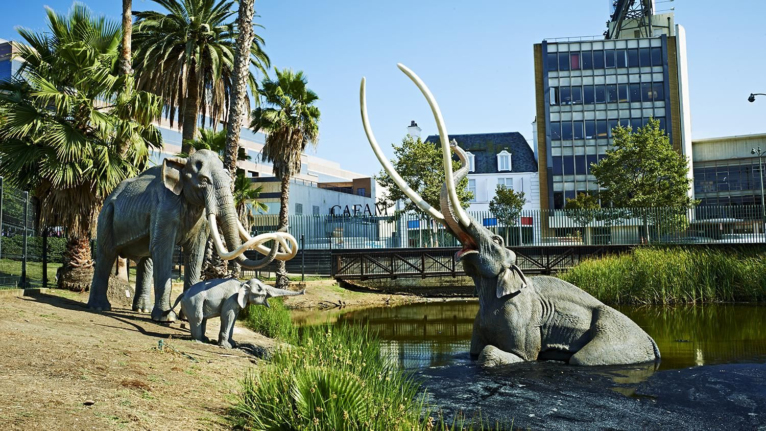 10 Fascinating Facts About The La Brea Tar Pits La Brea Tar Pits Los Angeles Attractions Los Angeles Travel