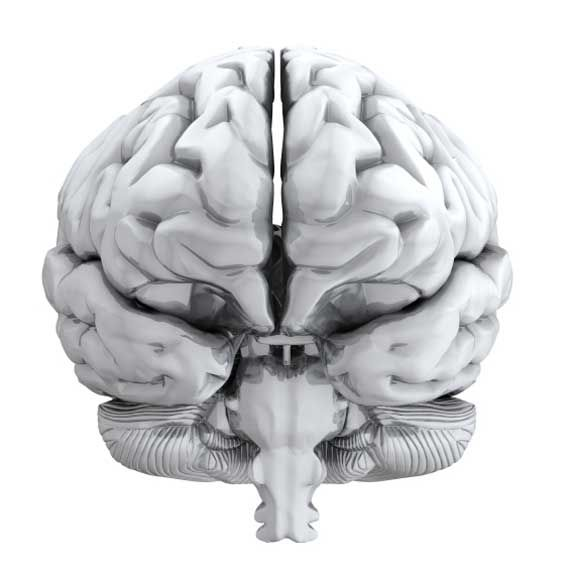 Human Brain Front View | Brain | Pinterest | Brain anatomy ...