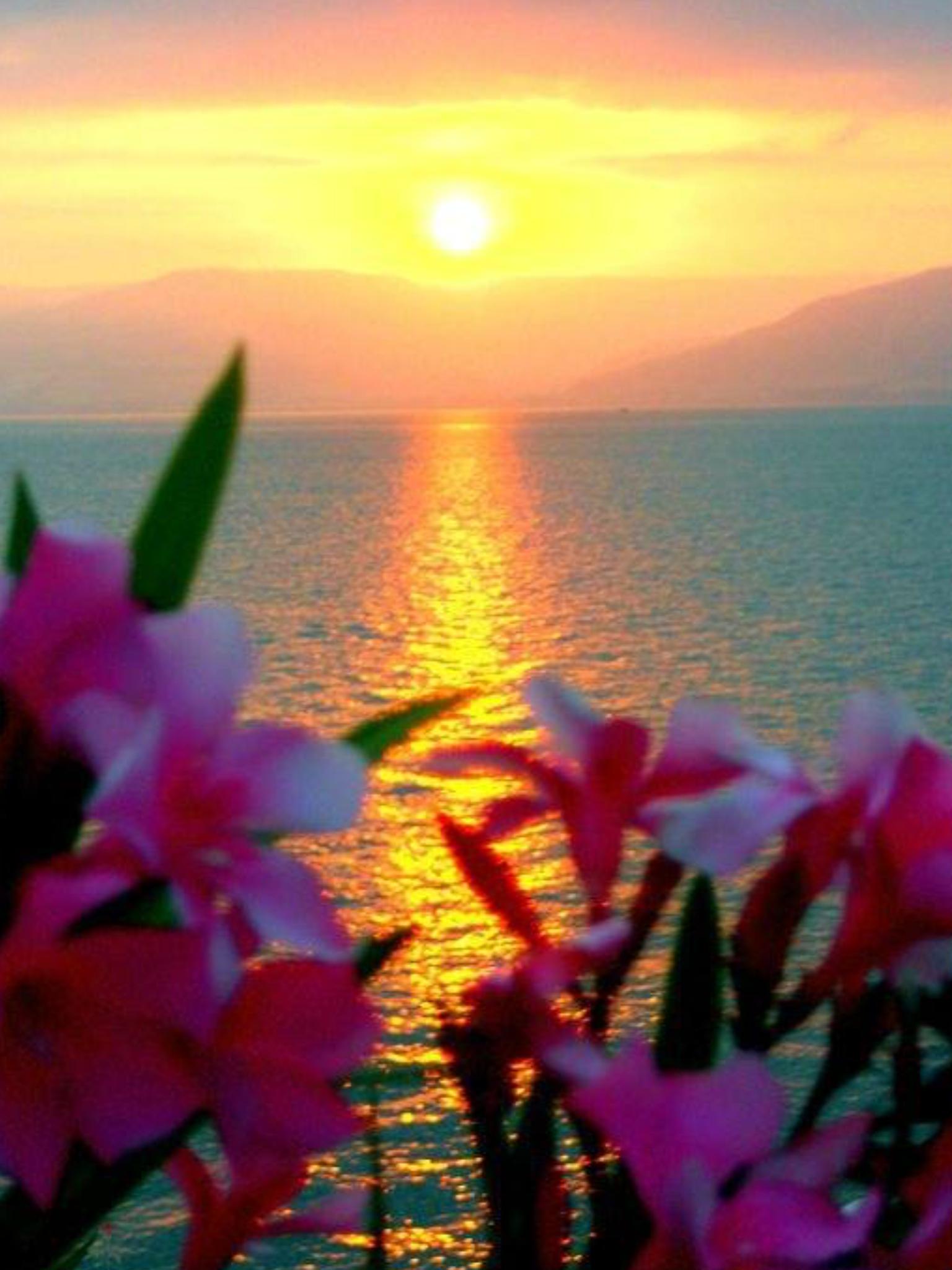 Moonskyamazng Natureflowers The Beauty Surrounds Me