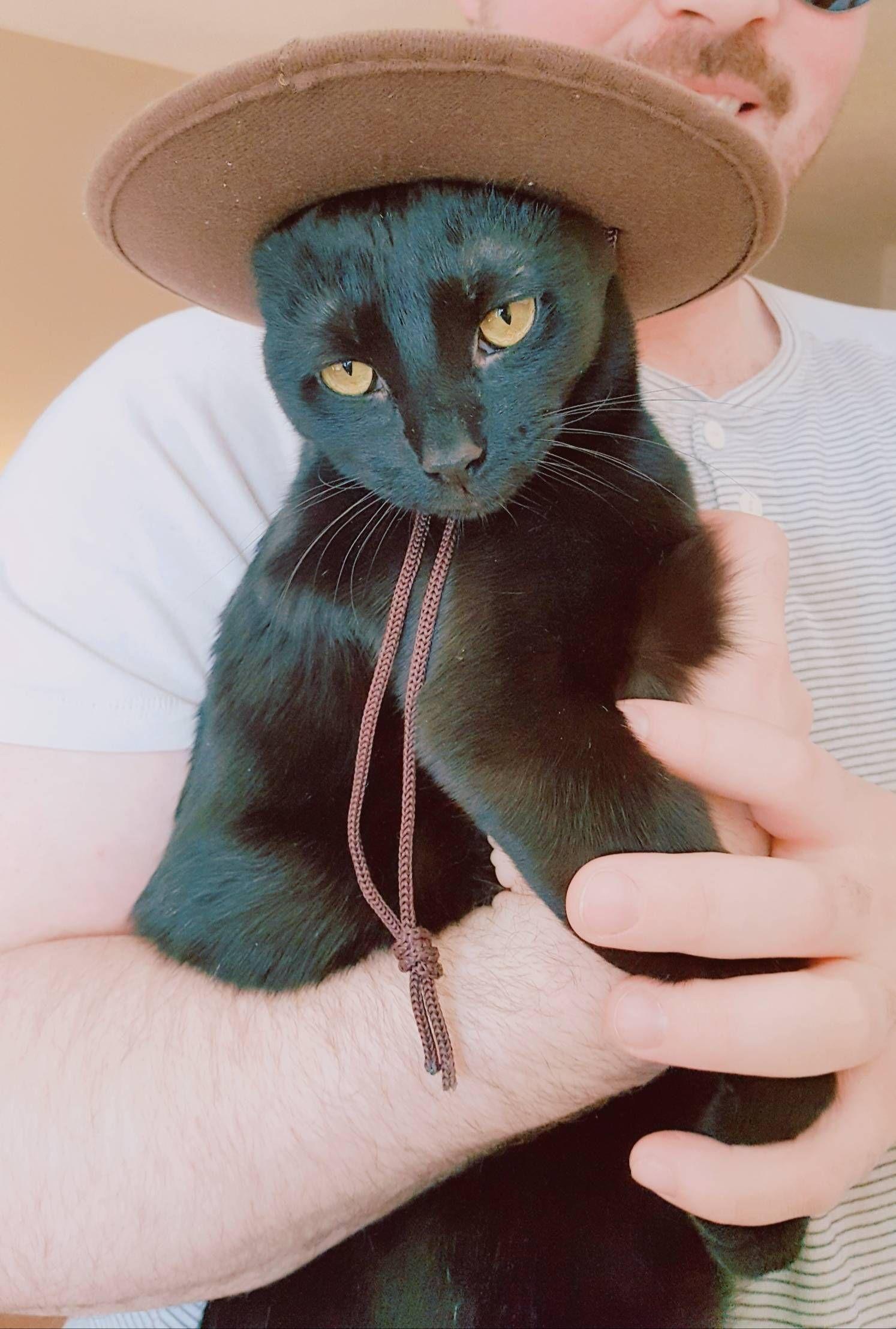 Cowgirl Cleo says Happy Friday 50th   Cat photo, Happy friday ...