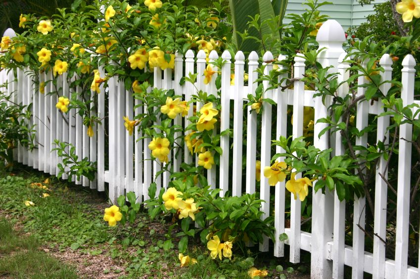 40 Beautiful Garden Fence Ideas Garden Fence Panels Flower Fence Garden Fencing
