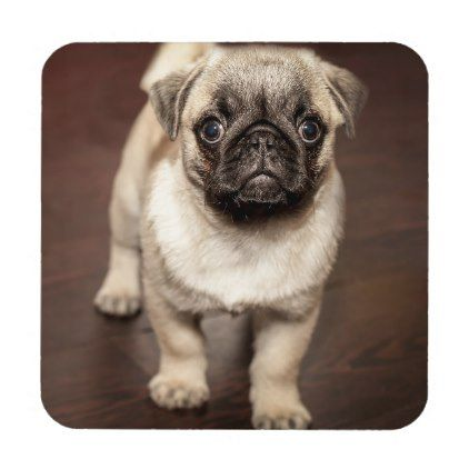 Cute Pug Puppy Photo Drink Coaster - dog puppy dogs doggy pup