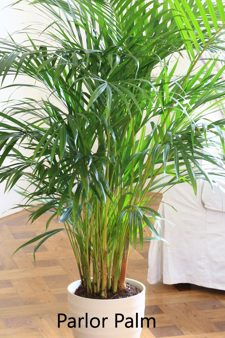10 Best Plants That Grows In Shade Without Sunlight At Home Growing Plants Indoors Plants Best Indoor Plants,Bedroom Small Apartment Decorating Ideas On A Budget