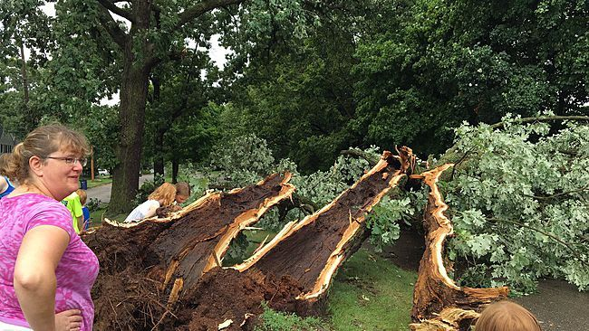 how to trees stop tornadoes