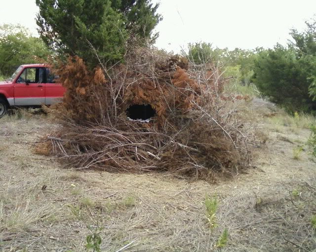 Lets See Simple Diy Blinds W Cattle Panels Texasbowhunter Com