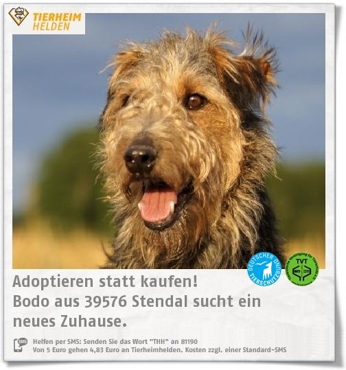 Pin Von Tierheimhelden On Pinterest Auf Tiere Aus Dem Tierheim Tierheim Welsh Terrier Und Tiere