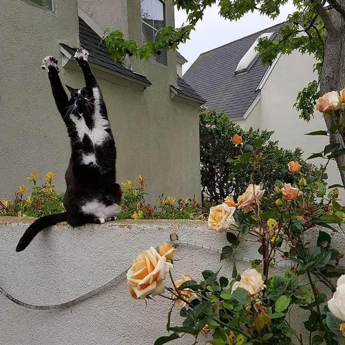 개드립 - 카메라 의식하는 고양이.jpg : 5a0f64516de83f878e82eabc972ae6b2.jpg