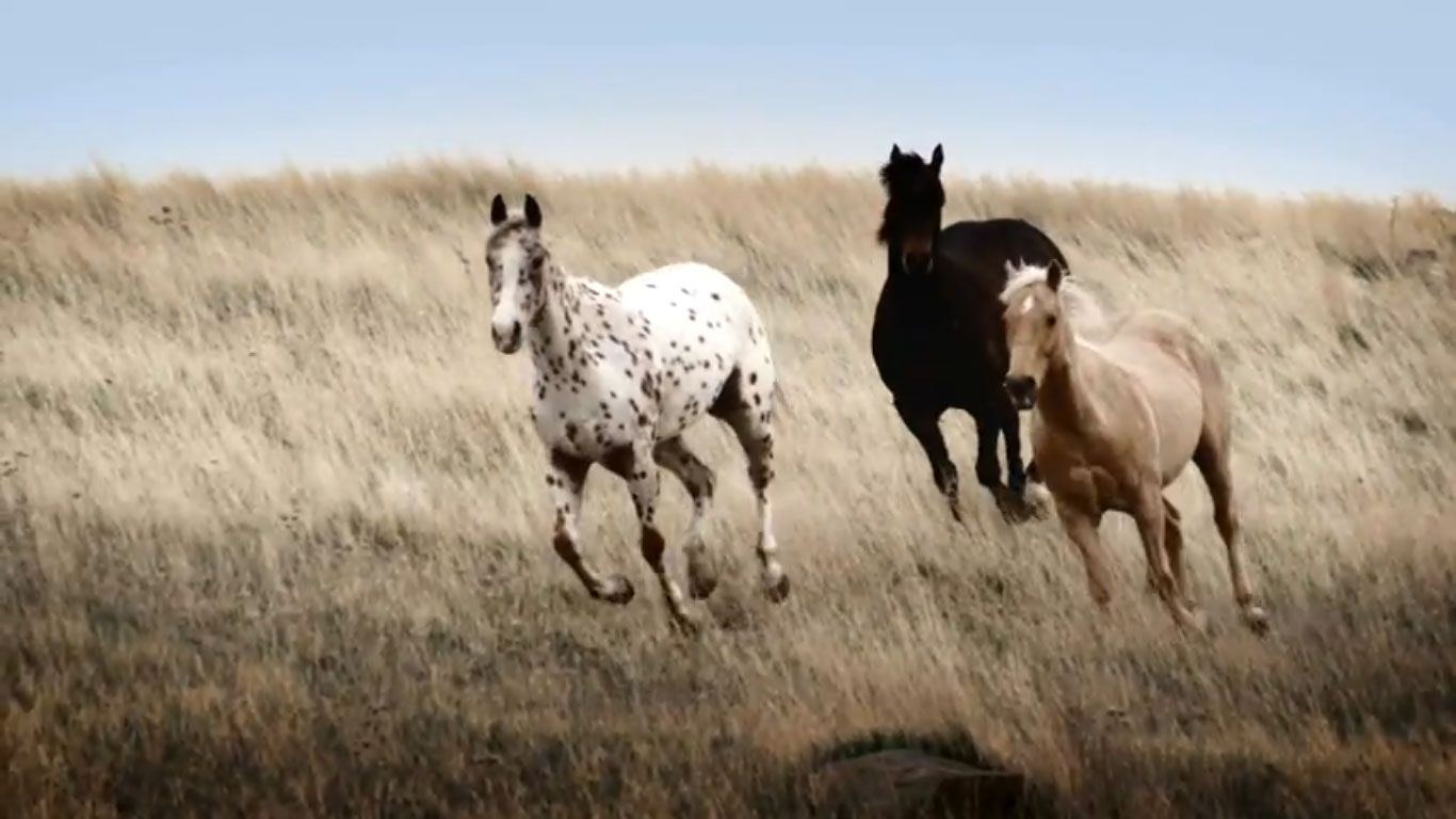 Wild Horse Wallpaper Related