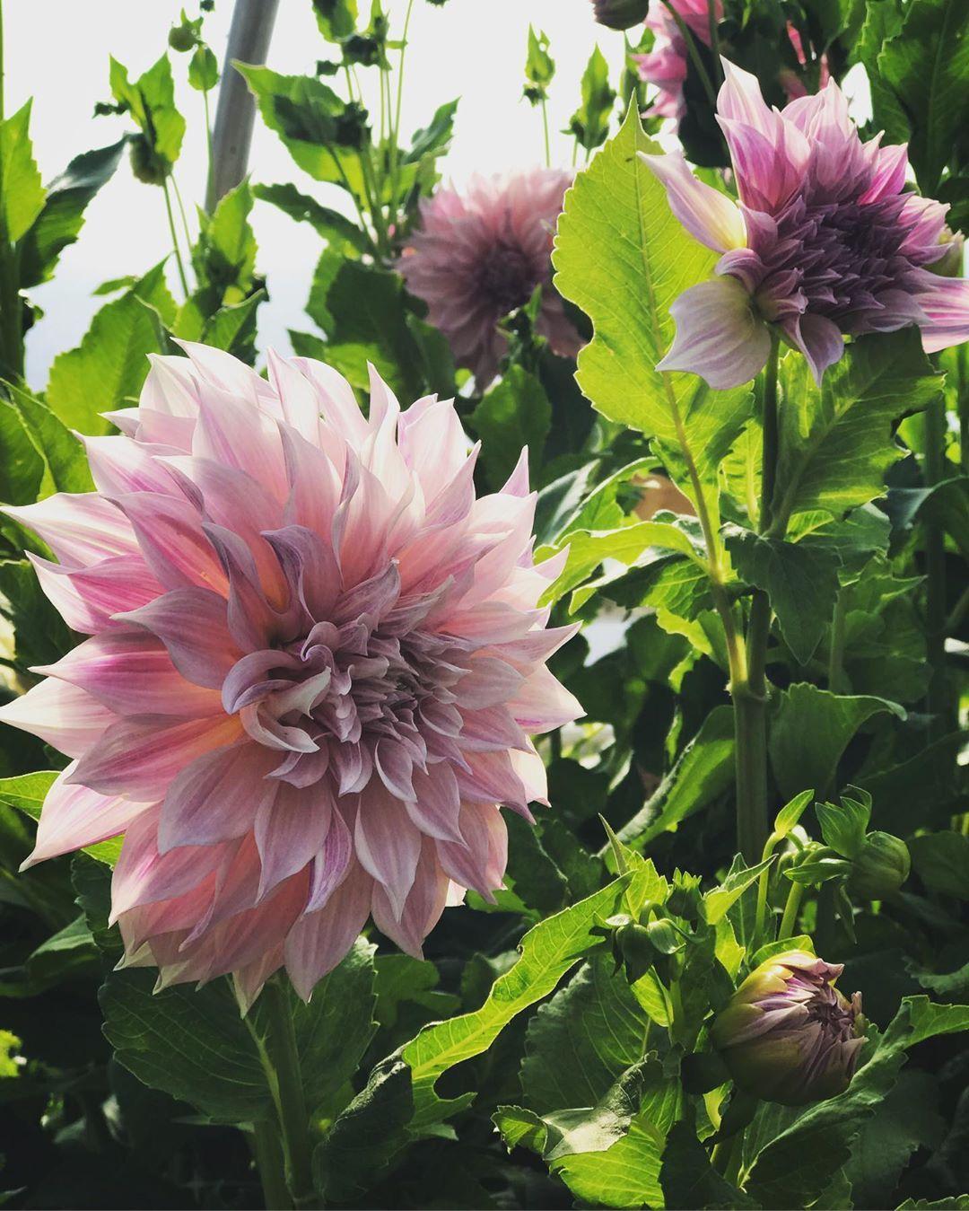 89 Likes, 1 Comments A.R. Pontius Flower Shop