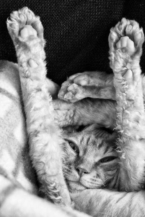 Un gatito contorsionista!