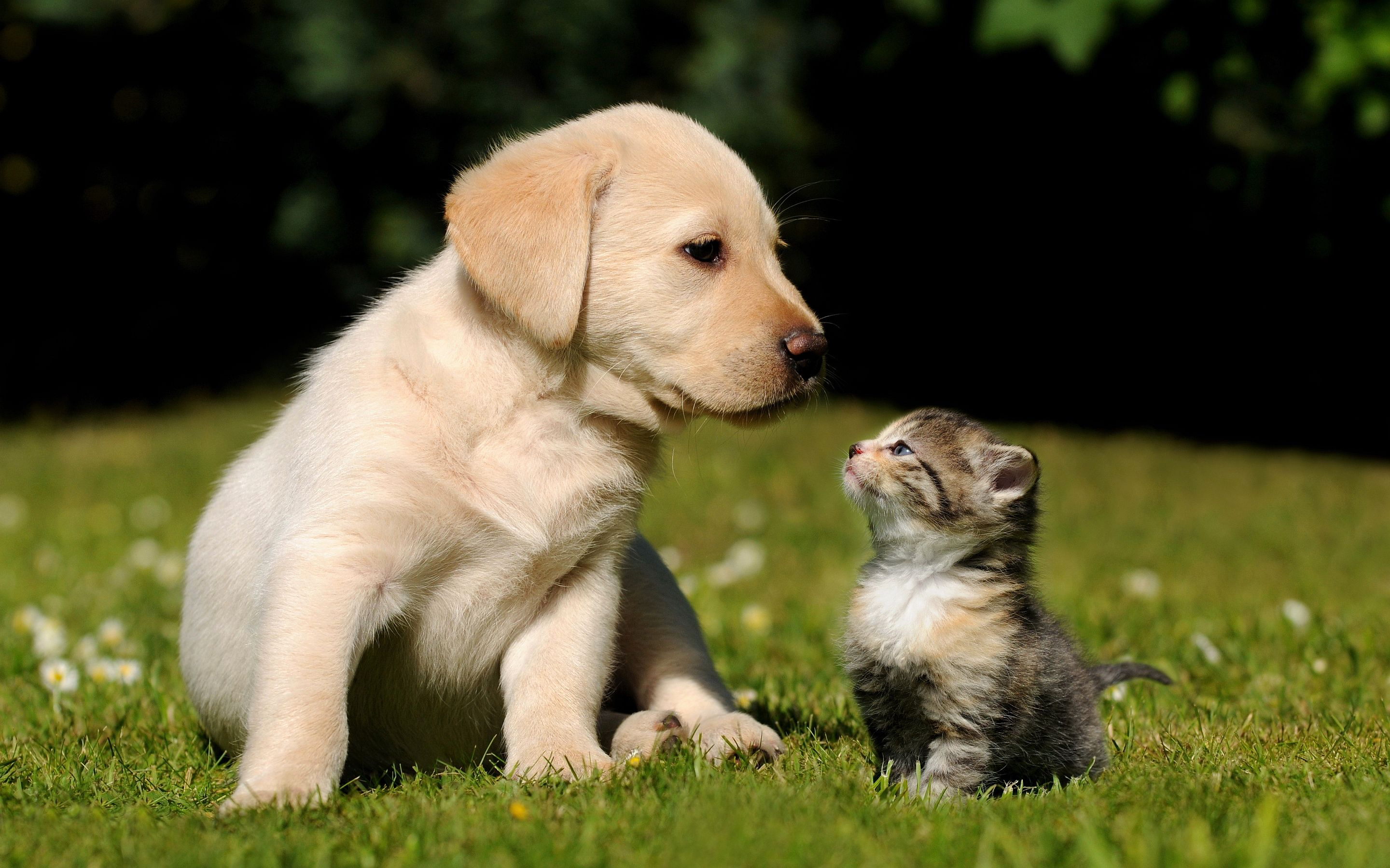 Pin By Tee Uhl On Baby Animals Better Focus Cute Puppies And Kittens Kittens And Puppies Retriever Puppy