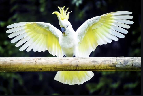 Top 21 Types Of Cockatoos Facts History Petco Near Me In 2020