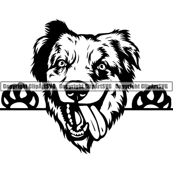 Beautiful pedigree dog breed illustration graphic design