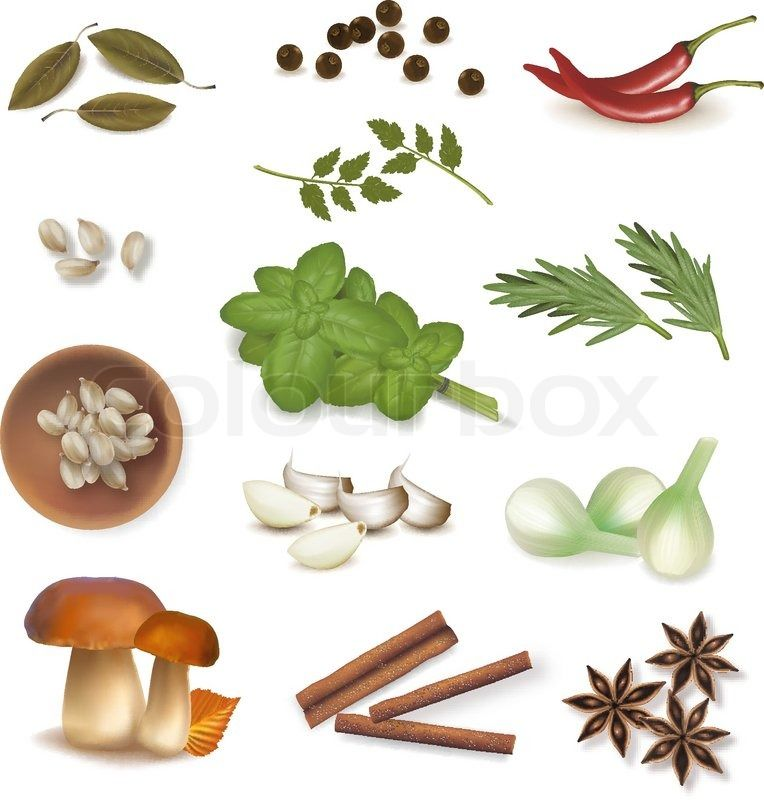 Stock vector of 'Group of spices. Vector.'